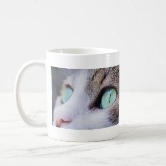 Gato de tigre gris de ojos verdes magnífico taza de café