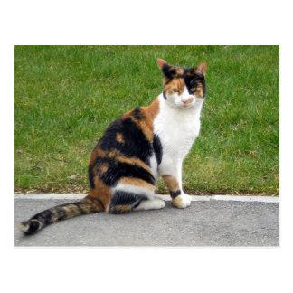 Gato de tigre postal