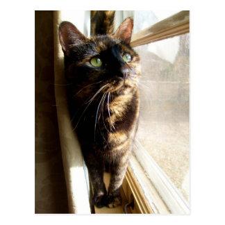 Gato de Torti en la postal