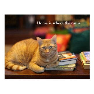 Gato del naranja de la postal