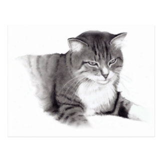 Gato: Dibujo de lápiz: Arte original Postal