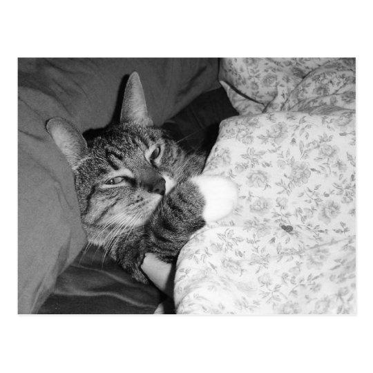 Gato divertido el dormir en postal de la cama