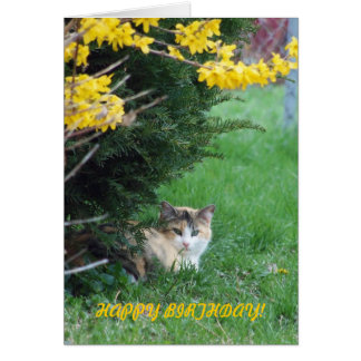 Gato, dulce uno, cumpleaños tarjeta pequeña