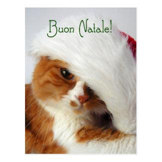 Gato en el gorra de Santa - postal italiana
