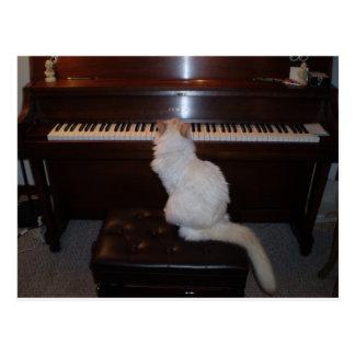 Gato en el piano postal