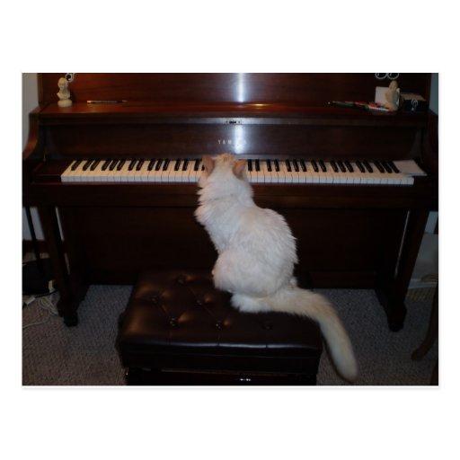 Gato en el piano tarjetas postales