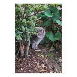 gato en un jardín postal