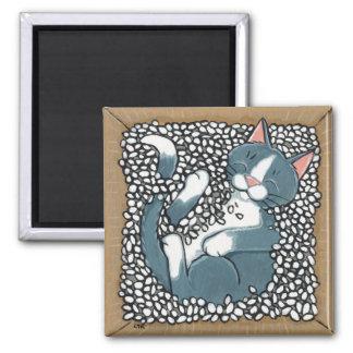 Gato gris del smoking que duerme en la caja de cac imanes
