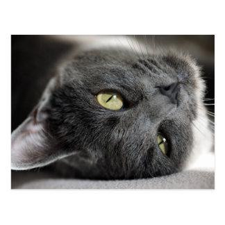 Gato gris lindo postal