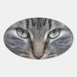 Gato guardado del gatito del Coon de Maine Colcomanias De Óval
