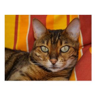 Gato hermoso de Bengala Postal