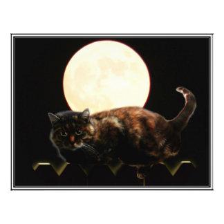 Gato iluminado por la luna en una cerca con la Lun