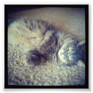 Gato-Instagram de pelo largo gris de Shirley Arte Con Fotos
