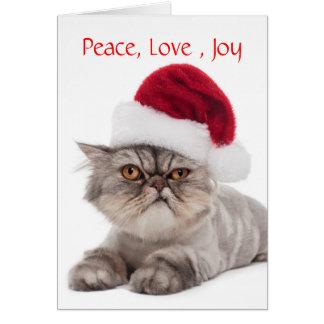 Gato irritable tonto con la tarjeta de Navidad del