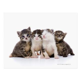 Gato japonés postal