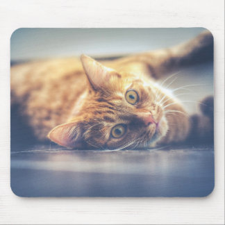 Gato juguetón adorable alfombrilla de ratón