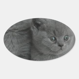 gato lindo del gatito del mascota del ronroneo del pegatina ovalada