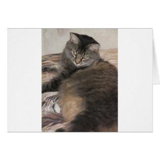 gato lindo gordo tarjetas