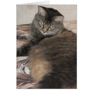 gato lindo gordo tarjeta de felicitación