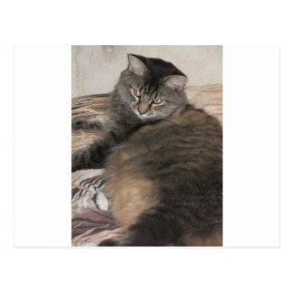 gato lindo gordo tarjeta postal