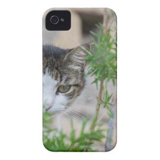 Gato lindo para cada día carcasa para iPhone 4