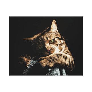 Gato lindo que juega la lona lienzo