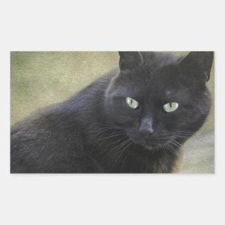 Gato masculino negro con los ojos verdes pegatina