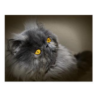 Gato mullido negro con los ojos anaranjados postal