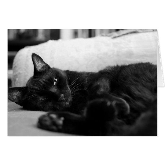 Gato Napping Tarjeta De Felicitación
