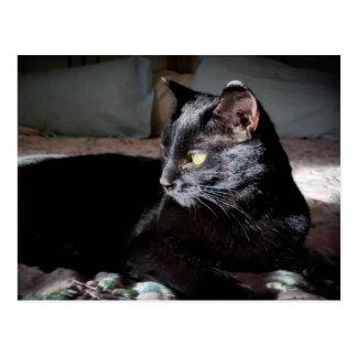 Gato negro en una postal de la cama