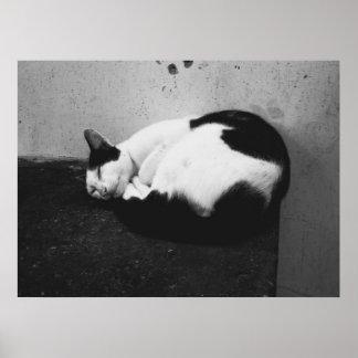 Gato negro y blanco póster
