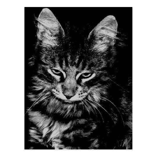 Gato noruego del bosque postal
