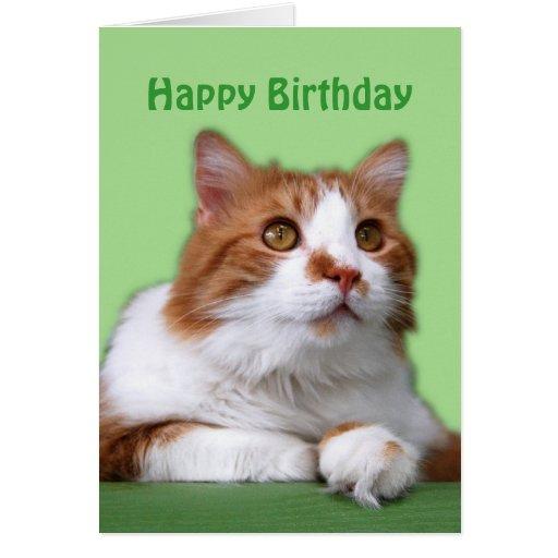 Gato pensativo del naranja del feliz cumpleaños y  felicitacion