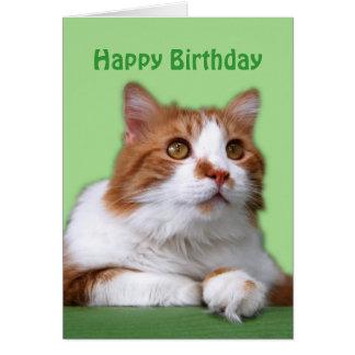Gato pensativo del naranja del feliz cumpleaños y tarjeta de felicitación