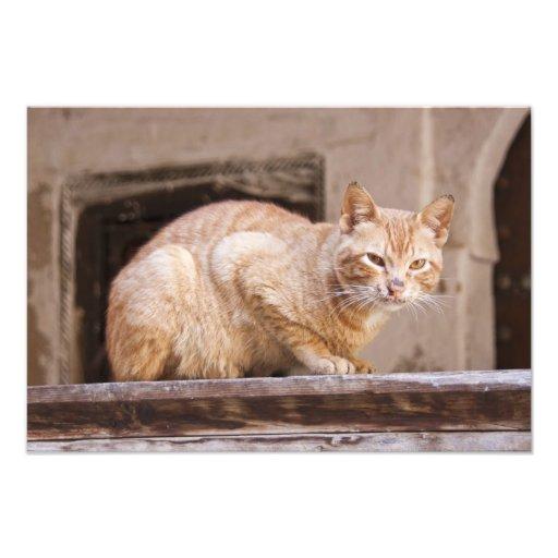 Gato perdido en Fes Medina, Marruecos 2 Arte Fotográfico