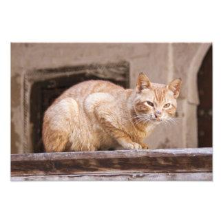 Gato perdido en Fes Medina, Marruecos Foto