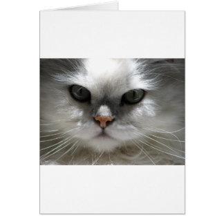 Gato persa de la chinchilla tarjeta de felicitación