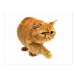 Gato persa postal