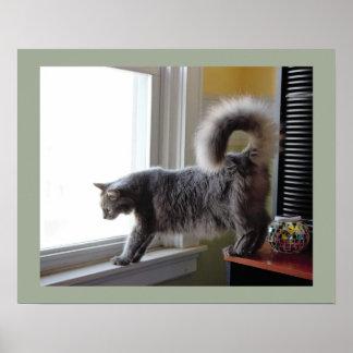 Gato que mira hacia fuera la ventana póster