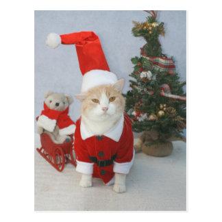 Gato rechoncho de Santa Tarjetas Postales