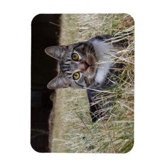 Gato salvaje del imán de Skooter
