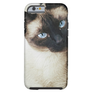 Gato siamés funda de iPhone 6 tough