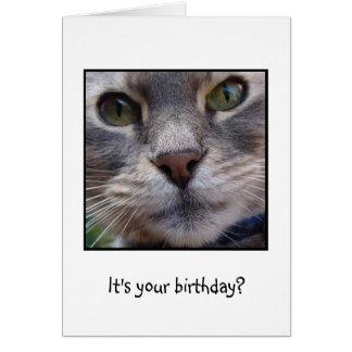 ¿Gato sorprendido, es su cumpleaños? Tarjeta