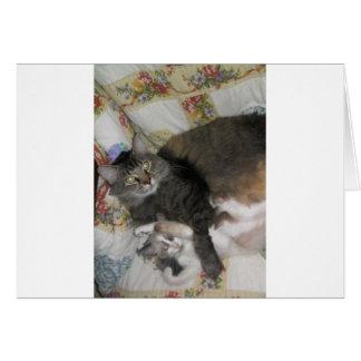 gato y gatito lindos gordos tarjeta