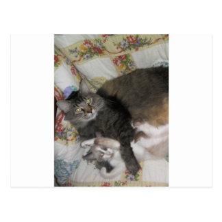 gato y gatito lindos gordos postal