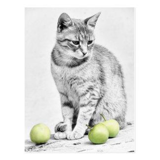Gato y manzanas postal
