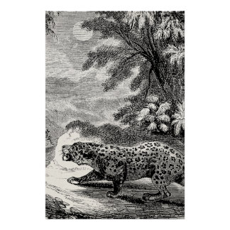 Gatos del gran juego de los leopardos de los 1800s póster