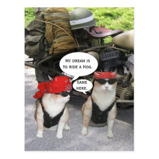 Gatos divertidos del motorista postal