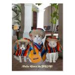Gatos divertidos Feliz Cinco de Mayo Tarjeta Postal