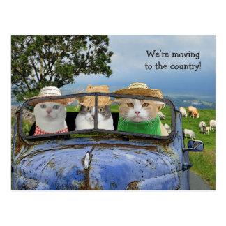 Gatos divertidos que mueven la postal